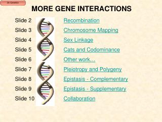 MORE GENE INTERACTIONS