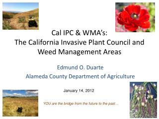 Cal IPC & WMA's: The California Invasive Plant Council and Weed Management Areas