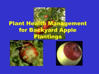 Plant Health Management for Backyard Apple Plantings