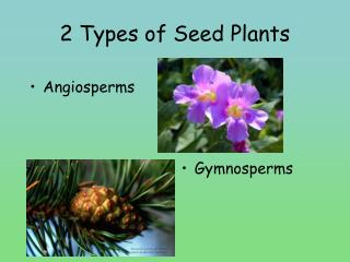 2 Types of Seed Plants