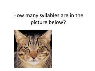 How many syllables are in the picture below?