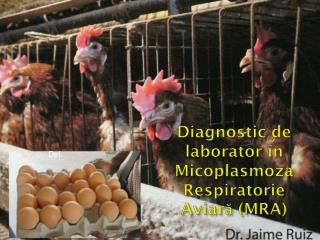 Diagnostic de  laborator în Micoplasmoza Respiratorie  Aviară  (MRA)