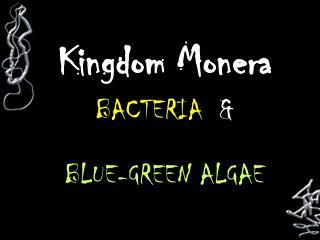Kingdom Monera BACTERIA   &   BLUE-GREEN ALGAE