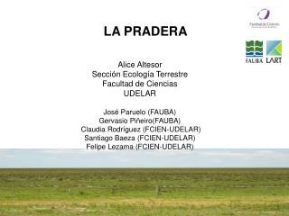 Alice Altesor Sección Ecología Terrestre Facultad de Ciencias UDELAR José Paruelo (FAUBA)