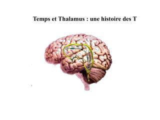 Temps et Thalamus : une histoire des T