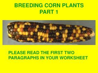 BREEDING CORN PLANTS PART 1