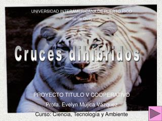 Cruces dihíbridos