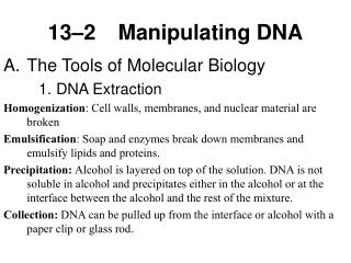 13 2 Manipulating DNA