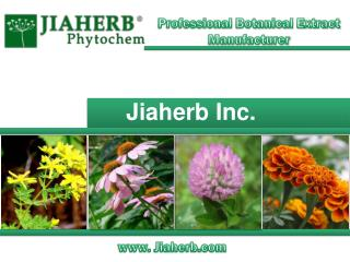 Professional Botanical Extract Manufacturer