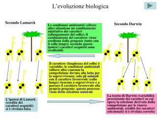 L'evoluzione biologica
