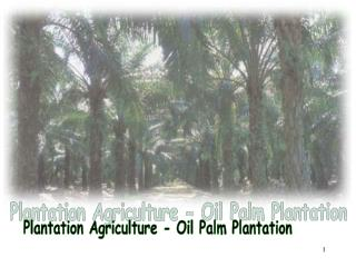 Plantation Agriculture - Oil Palm Plantation