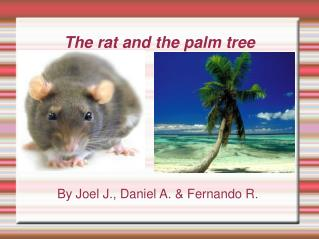 The rat and the palm tree