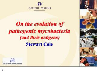 On the evolution of pathogenic mycobacteria and their antigens