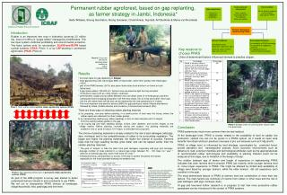 Permanent rubber agroforest, based on gap replanting, as farmer strategy in Jambi, Indonesia*