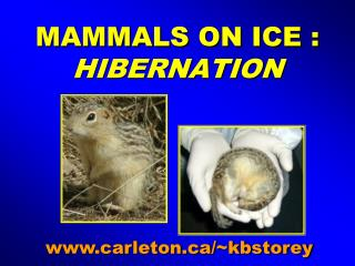 MAMMALS ON ICE :   HIBERNATION