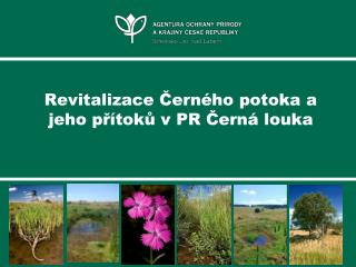 Revitalizace Černého potoka a jeho přítoků v PR Černá louka