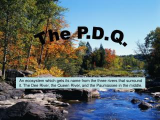 The P.D.Q.