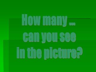 How many ...  can you see  in the picture?