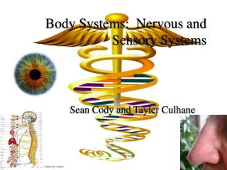 Body Systems:  Nervous and Sensory Systems