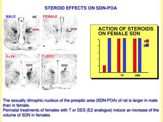 STEROID EFFECTS ON SDN-POA