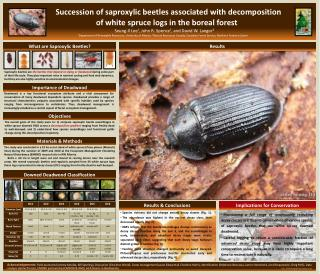 What are Saproxylic Beetles?
