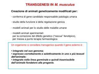 TRANSGENESI IN  M. musculus