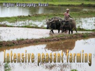 Intensive peasant farming