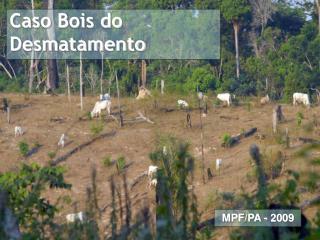 Caso Bois do Desmatamento
