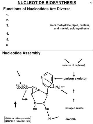 NUCLEOTIDE BIOSYNTHESIS
