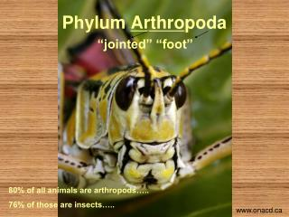 "Phylum  Arthro poda ""jointed"" ""foot"""