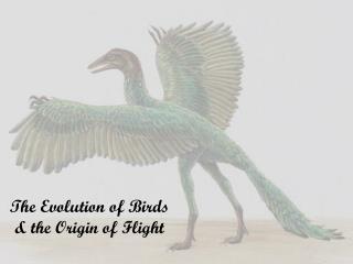 The Evolution of Birds & the Origin of Flight