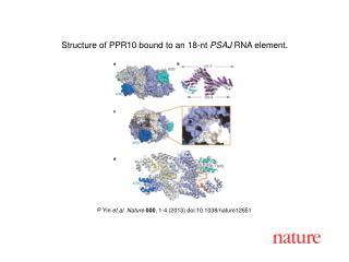 P Yin  et al.  Nature  000 ,  1 - 4  (2013)  doi:10.1038/nature12651