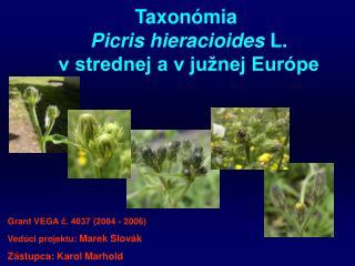 Taxon ó mia  Picris hieracioides L. v strednej a v južnej Európe