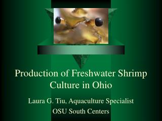 Production of Freshwater Shrimp Culture in Ohio