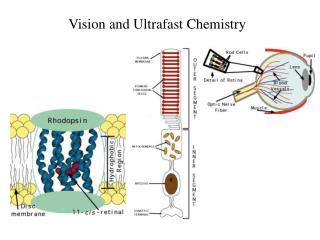 Vision and Ultrafast Chemistry
