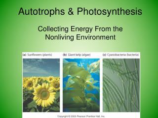 Autotrophs & Photosynthesis