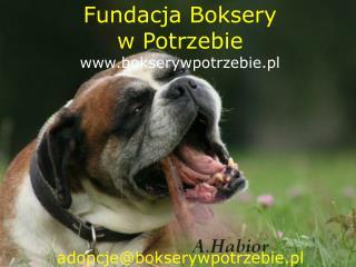 Fundacja Boksery  w Potrzebie bokserywpotrzebie.pl