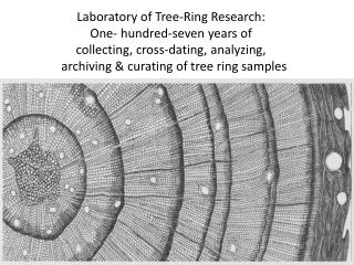 Dendrochronology: The value of cross-dated tree rings