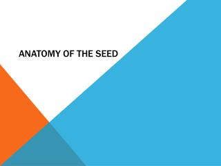 Anatomy of the Seed