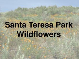 Santa Teresa Park Wildflowers
