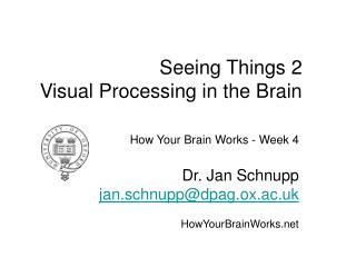 Seeing Things 2 Visual Processing in the Brain