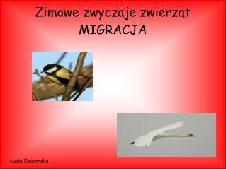 Zimowe zwyczaje zwierząt  MIGRACJA