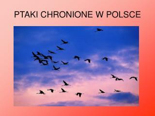 PTAKI CHRONIONE W POLSCE