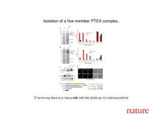 TF de Koning-Ward  et al. Nature 459 , 945-949 (2009) doi:10.1038/nature08104