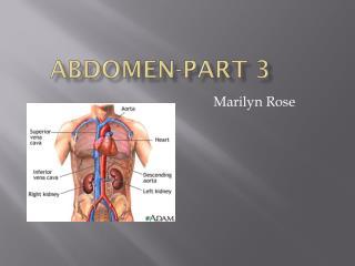 Abdomen-Part 3