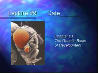 Lecture #9		Date______