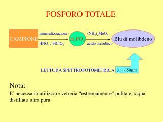 FOSFORO TOTALE