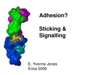 Adhesion? Sticking & Signalling