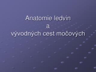 Anatomie ledvin  a  vývodných cest močových