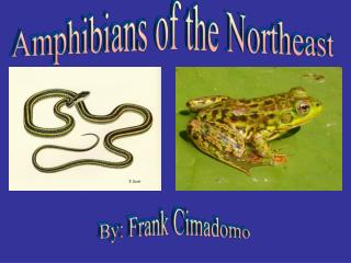 Amphibians of the Northeast
